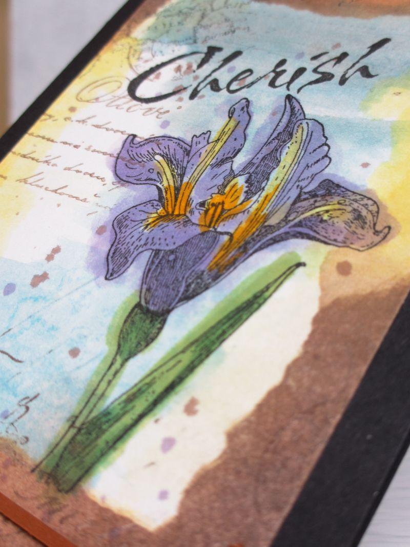 Iris「Purple Fold」2